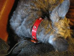 Dog-Collars-Red-PinkStones.jpg